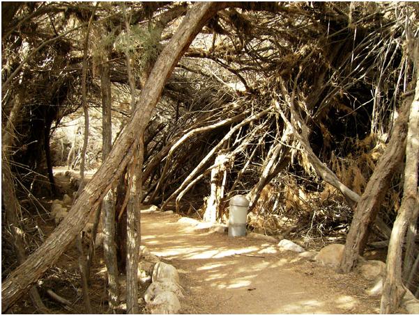 Живописные тропы в Вади-Хараре